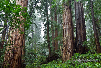 Muir Woods National Monument California.  One of the coolest National Monuments on the west coast.