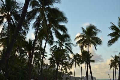 Palm Trees on Waikiki