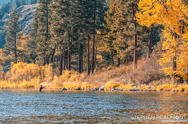 Fall Fly Fishing, Blackfoot River