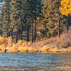 Fall Fly Fishing, Blackfoot River
