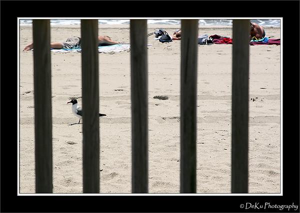 Boardwalk(orig)_0028