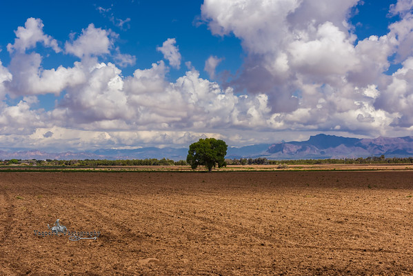 Aftermath of Yesterday's Stormy Skies, San Tan Valley AZ (3 March 2015)