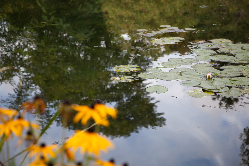 Lilliepads at Monet's home.  The gardens were a tremendous site to see.