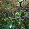 In Monet's garden.
