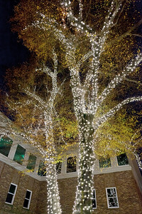 111711_8799_VNA Tree Lighting