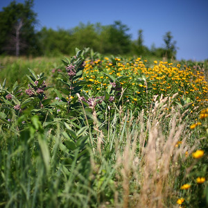Prairie, Montrose Bird Sanctuary, Chicago