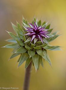 Plants and Closeups