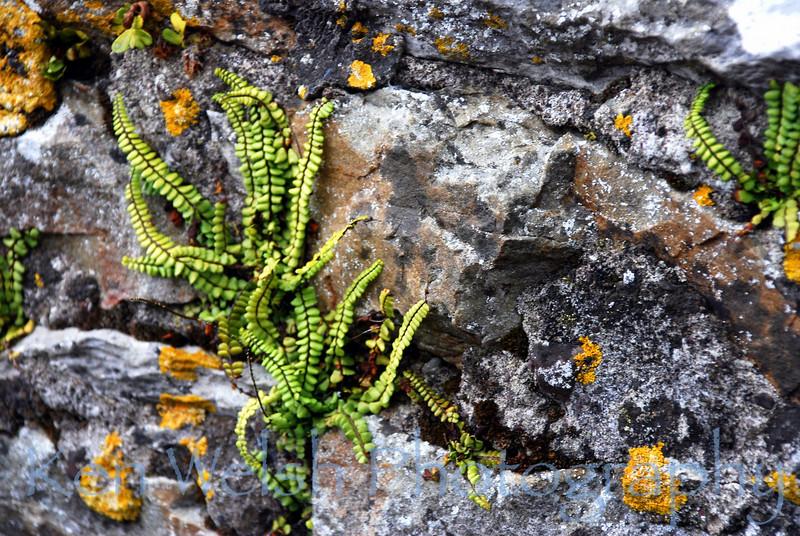 """""""Taking Root""""<br /> <br /> Blarney Castle<br />  © Copyright Ken Welsh"""