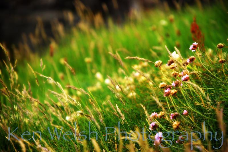 """Irish Pasture""<br /> <br /> © Copyright Ken Welsh"