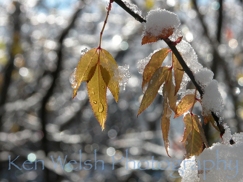 """An Early Snow""<br /> <br /> © Copyright Ken Welsh"
