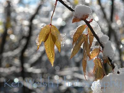 """""""An Early Snow""""  © Copyright Ken Welsh"""