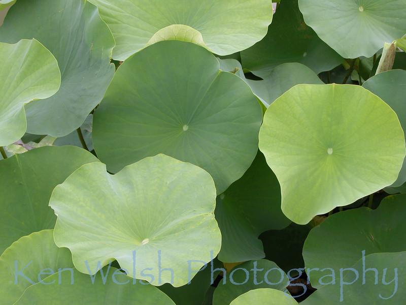 """""""Lotus I"""""""