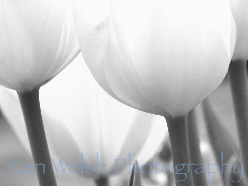"""""""Grey Spring""""<br /> <br /> Chicago Botanical Gardens <br /> © Copyright Ken Welsh"""
