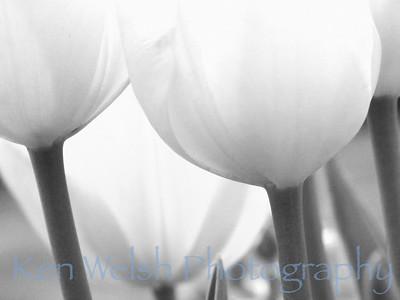"""Grey Spring""  Chicago Botanical Gardens  © Copyright Ken Welsh"