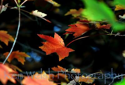 """""""Suspended""""  © Ken Welsh Copyright"""