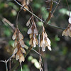 """Hanging There""<br /> <br /> © Ken Welsh Copyright"