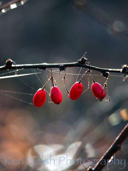 """""""Entangled""""<br /> <br /> © Copyright Ken Welsh"""