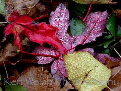 """Autumn Mist""  © Copyright Ken Welsh"