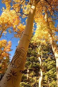 Cowboy Graffiti, or trail markers to the El' Dorado?