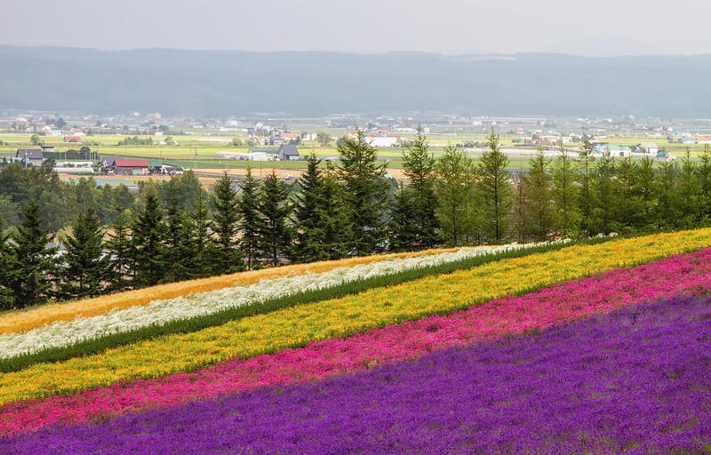Furano's Field of Dreams