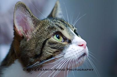 Cruiser - an international kitty