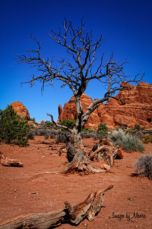 """Hanging On"" Archers National Park, Utah Travel Photography"