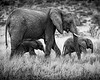 Mother Elephant with Her Young