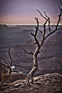 A dead tree on the edge of Hopi Point