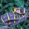 Mangrove Snake Smile