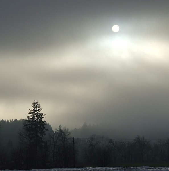Foggy Day Forest Grove
