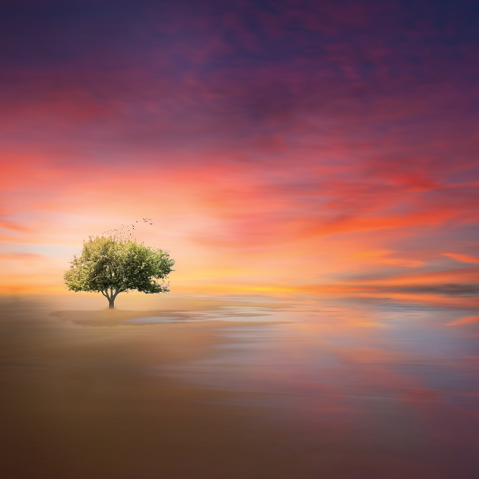 surreal tree