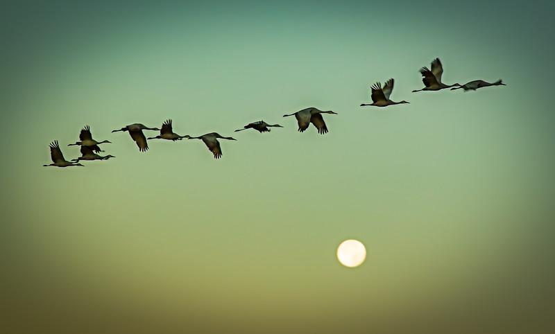 """Crane Formation"""