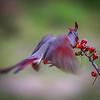 Red Blur I
