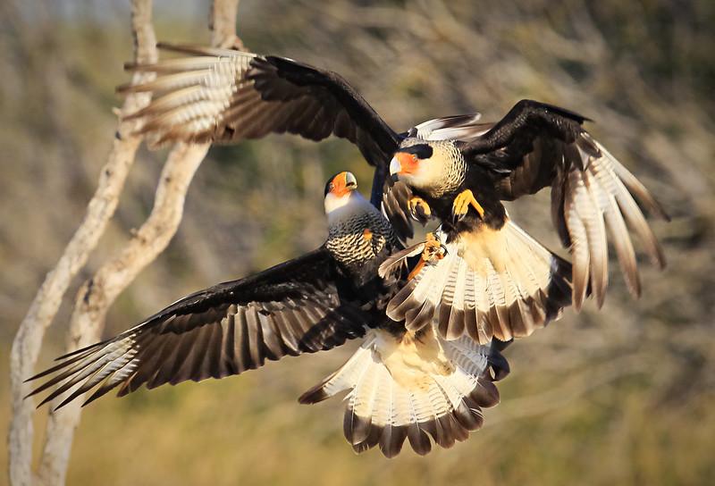 """""""Aerial Combat"""""""