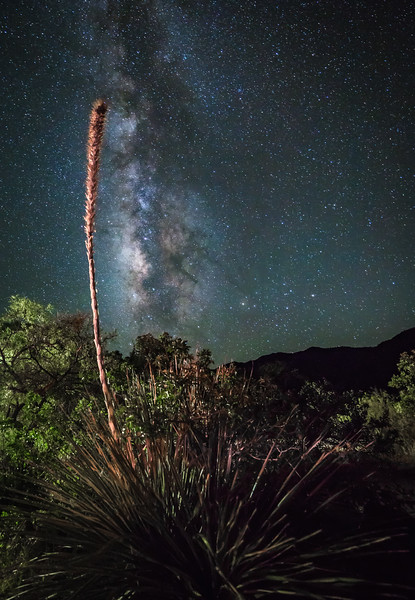 """""""Desert Milky Way"""""""