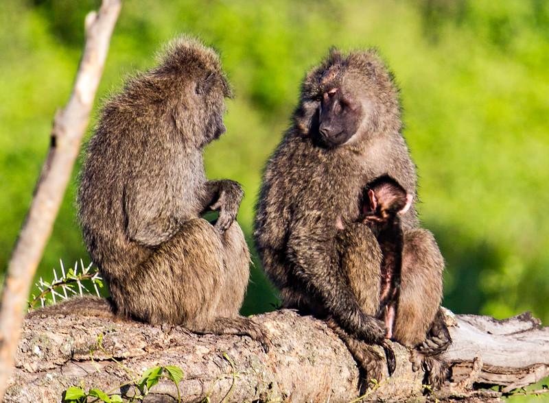 """""""Monkey Moms"""""""