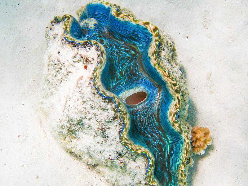 """""""Aitutaki Gem"""""""