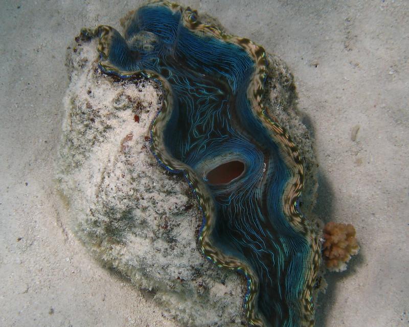 """Turquoise Treasure"""