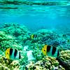 """""""Reef Beauties"""""""