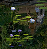 Duke University Gardens --- <br /> <br /> Durham North Carolina                                                              Lexington Kentucky Photographer John Lynner Peterson