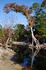 Okeefenokee Swamp - Georgia ---                                                              Lexington Kentucky Photographer John Lynner Peterson
