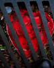 Grate Heart (Washington D.C. 2005 ---                                                              Lexington Kentucky Photographer John Lynner Peterson
