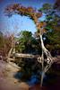 Lone Tree Web IMG_0618 copy