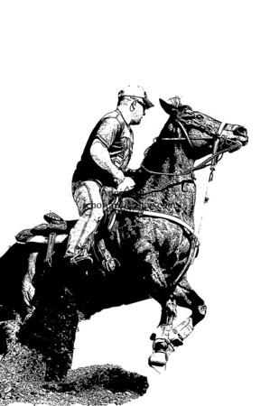 Portfolio - Horses