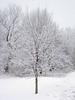 02-24-2010-Snow-022