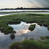 Tidal Pool -- Long Island Sound