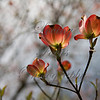 Flowers0807_lg