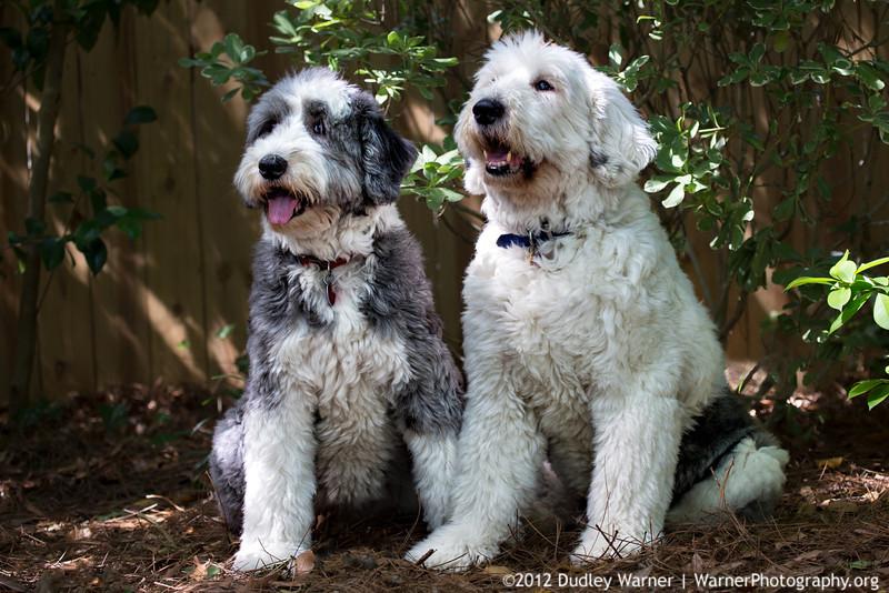 Austin & Lucy