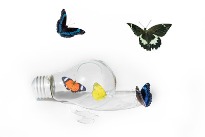 Butterflies in a Light Bulb