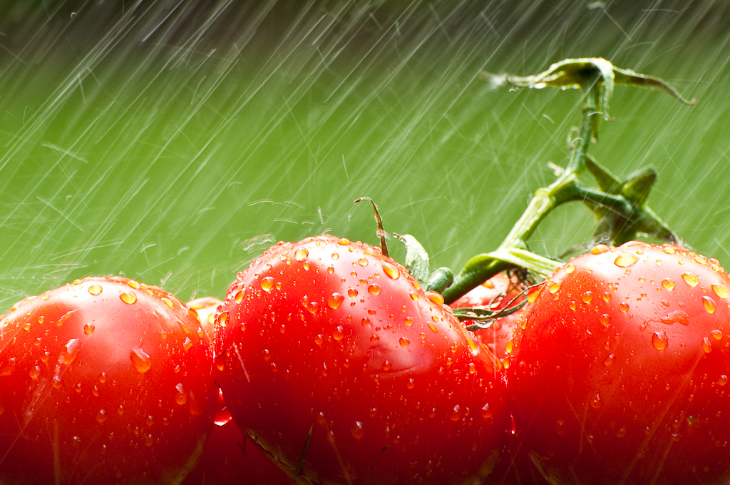 Tomato Torrent